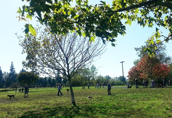 dog park Oct 6