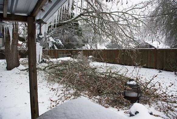 Disintegrating tree
