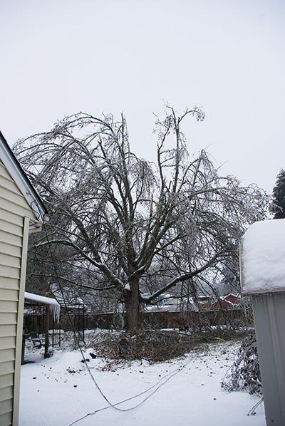 Once beautiful tree