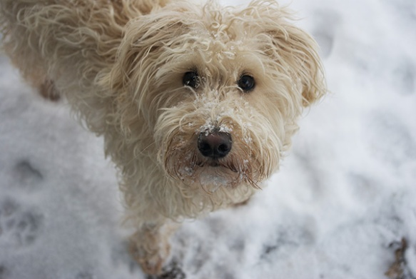 Ozzie snow nose