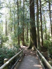Darlingtonia Path